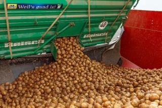newsletter-Kartoffelanlieferung-SPANGLER-Automation